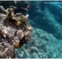 Roślinki podwodne